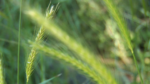 field grass b Stock Video Footage