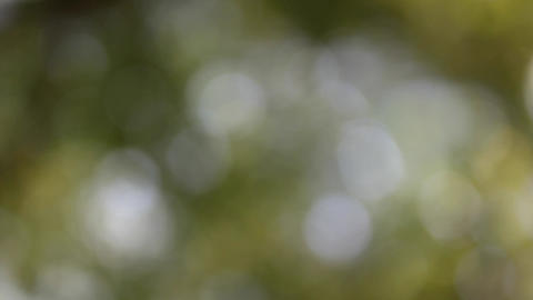 Looping blurry nature Stock Video Footage