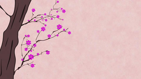 Cherry Blossoming 6 Stock Video Footage