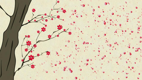 Cherry Blossoming 12 Stock Video Footage