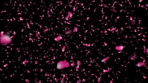Sakura Cherry Blossoms Flying Pink 2 alpha Animation