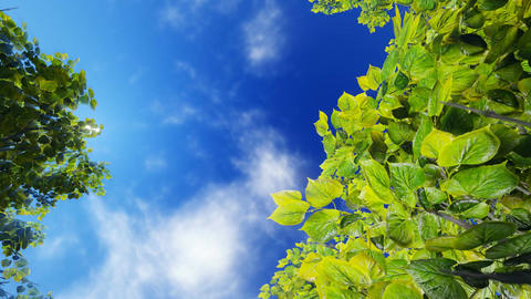 Green foliage against blue sunny sky Footage