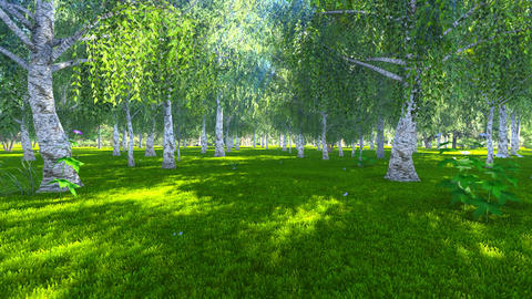Sunny day in a birch grove Footage