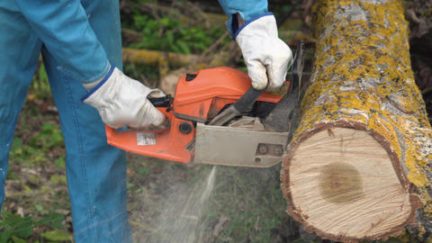 Lumberjack logger worker in protective gear cutting firewood timber tree in Footage