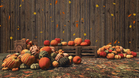 Autumn pumpkins on wooden background with copy space Live Action
