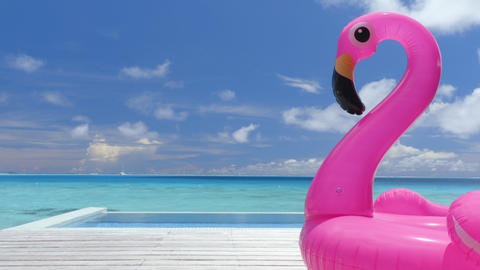 Seamless Loop video: Pool Beach Vacation travel pink flamingo float toy by pool Footage