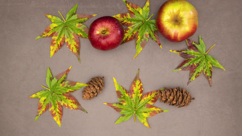 Autumn concept - Books, apples, leaves, pine cones appear - Stop motion CG動画