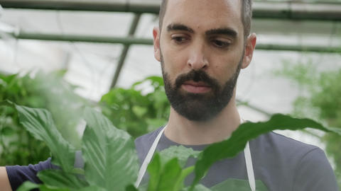 Face Of Man At Work As Gardener In Flowers Store Footage