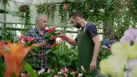 Sales Manager Talking To Client Buying Plant in Florist Shop Footage