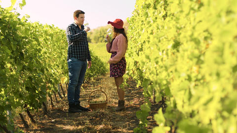 Caucasian couple clinking glasses in a vineyard Footage