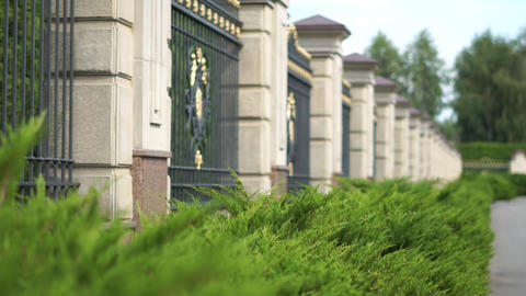 Luxurious high fence with coniferous bushes planted in slow motion Footage
