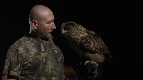 Big adult owl is sitting on his trainers hand and nuzzling his face Live Action