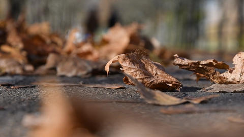 Fallen dry leaves lie on the path, people walk. Day off in autumn Park in Sunny weather Archivo