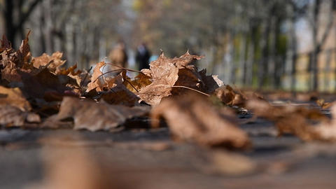 Fallen dry leaves lie on the path, people walk. Day off in autumn Park in Sunny weather Live Action
