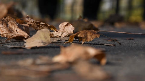Go on the pavement people, lying on the road, oak leaves and warm autumn day. Sunday camping in the Footage