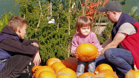 Father and kids selecting pumpkin, having fun in garden Footage