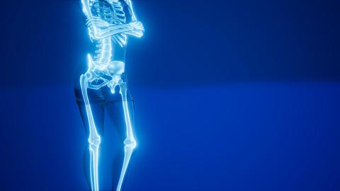 Human Skeleton Radiography Medical Scan Live Action