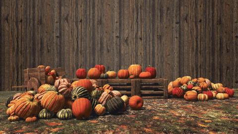 Pumpkins at autumn farmers market on wooden background CG動画