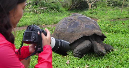 Galapagos Islands Wildlife videographer and tourist by Giant Tortoise Live Action