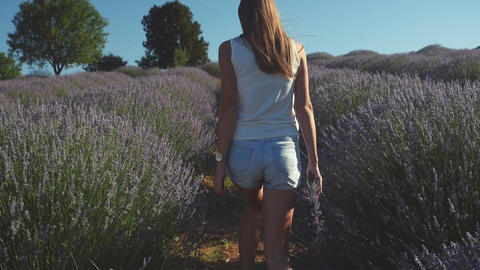 Young woman in casual clothes walking in lavender field Live Action