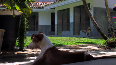 dog has rest in thick cool shadow against ginger neighbor Live Action