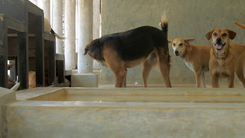 maintained dogs living in animal shelter under canopy Live Action