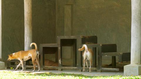 pretty resting homeless dogs lie under dark wooden stairs Footage