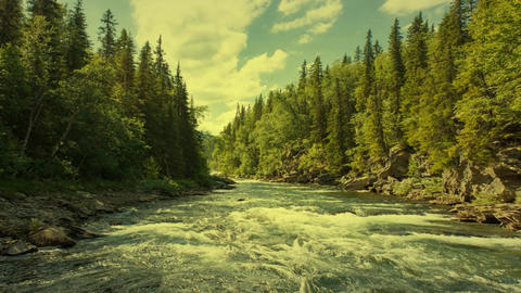 134 3d animated landscape of water and forest Animation