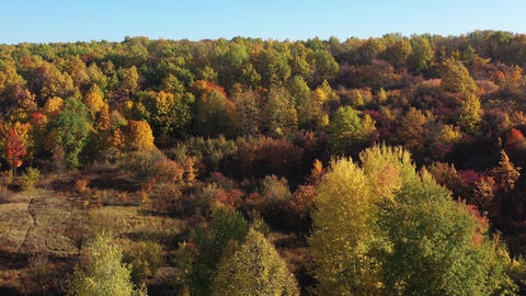 Epic aerial flight over the autumn forest. Aesthetics of autumn nature. Sunlight Footage