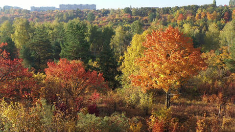 Autumn forest aerial view. Beautiful colorful seasonal foliage. Huge beautiful Live Action