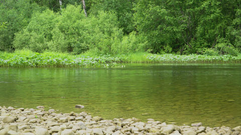 Calm flow of the river near the rocky shore Footage