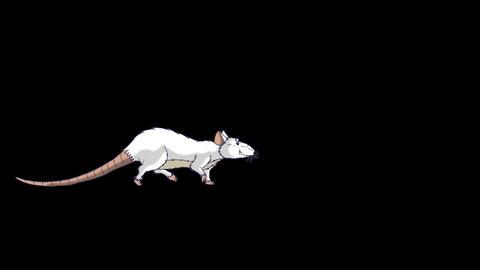 White Rat Walks animation Alpha Matte Videos animados
