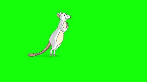White rat gets up and sniffs something animation Chroma Key Videos animados