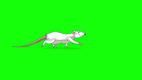 White rat sneaks animation Chroma Key Videos animados