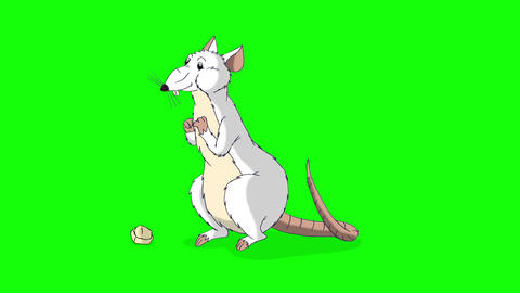 White rat crawls out and eats cheese animation Chroma Key Videos animados