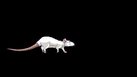 The white rat comes, sniffs and leaves animation Alpha Matte Videos animados
