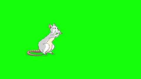 White rat sits and washes animation Chroma Key Videos animados