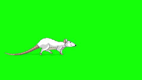 White Rat Walks animation Chroma Key Videos animados
