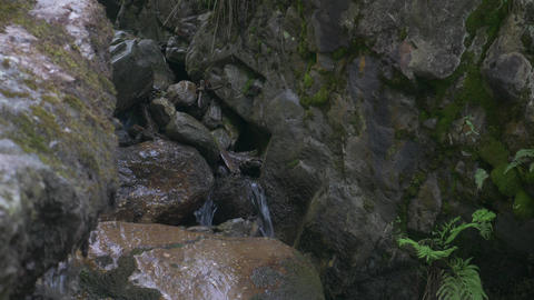 Small Mountain Stream in Green Forest Live Action