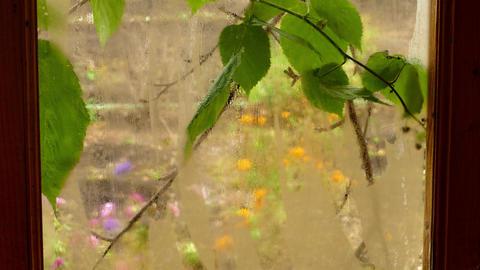 a foggy window overlooking the autumn garden GIF