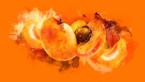 The appearance of the apricot on a watercolor stain CG動画
