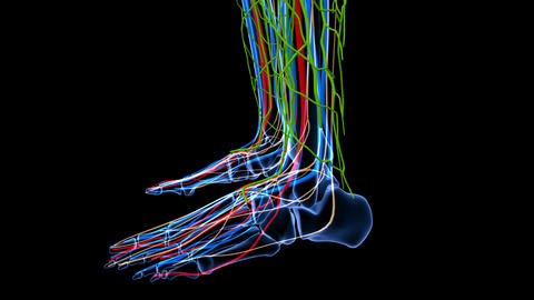 Medical footage with x-ray view of foot part showing different body systems ライブ動画