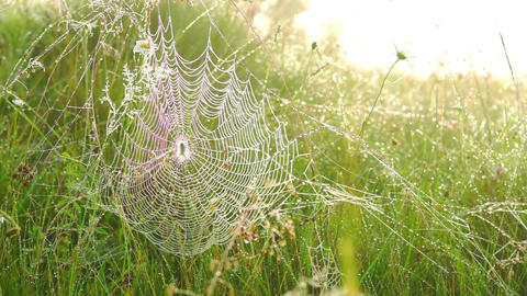 Spider on a Web Footage
