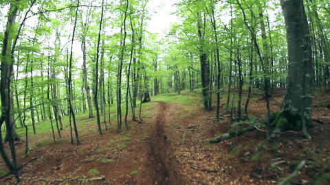 Man walking on a path in the woods green which winding after trees 12 Footage