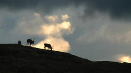 Reindeer Graze On A Background Of Hills In The Tundra 1