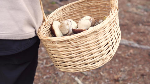 Mushroomer Collect Mushroom On Forest During Summer Day GIF