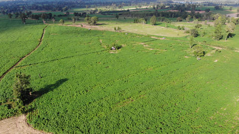 Drone shot aerial view scenic landscape of agriculture farm at countryside Live Action