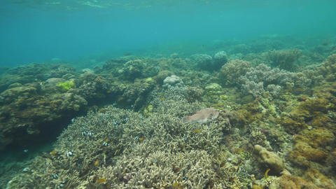 Underwater scene of marine sanctuary rich in corals and different fishes Footage