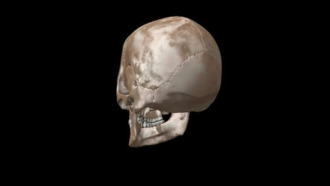 Real Skull medical loop-able turntable footage for education and presentation Live Action