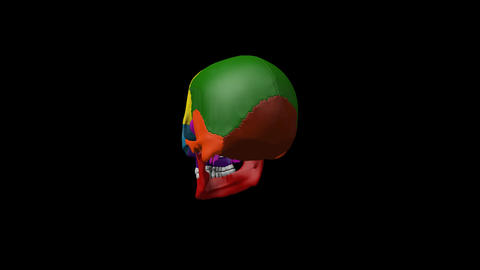 Multi color human skull turntable footage showing different parts for education  Live Action